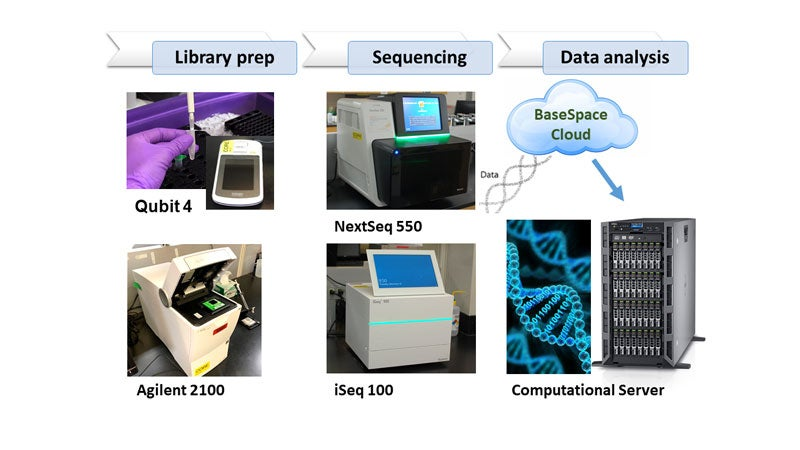 Image showing overview of the workflow from Library Prep to Sequencing to Data Analysis